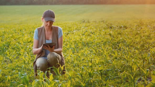 Thumbnail for Woman Works in a Field of Young Corn, Uses a Tablet. Side View