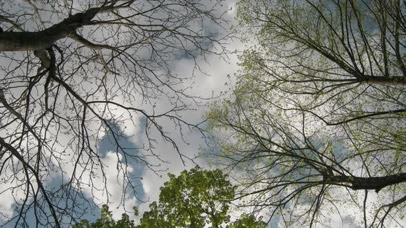 Thumbnail for Clouds over the trees Time Lapse