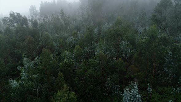 Thumbnail for Fog in Mountain Forest