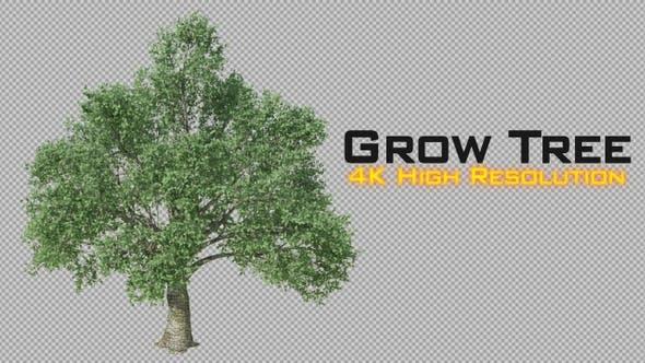 Thumbnail for Growing Tree 4K