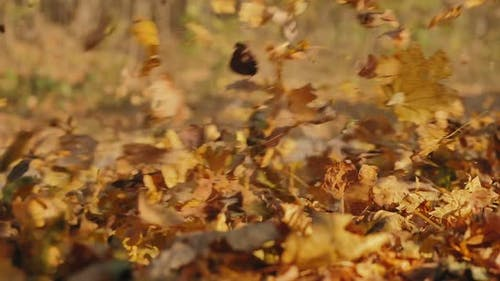Car Driving Through Autumn Forest, Swirling Colorful Leaves
