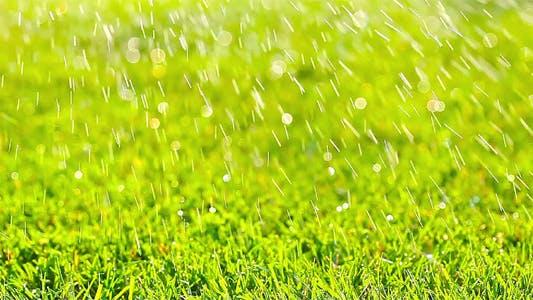 Thumbnail for Green Grass 2