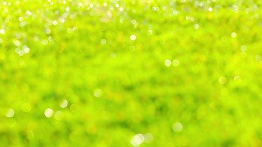 Thumbnail for Green Grass 4