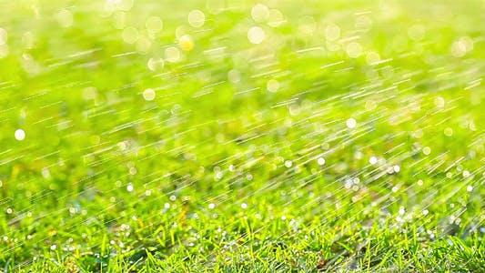Thumbnail for Green Grass 8