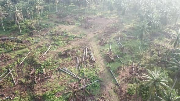 Dead oil palm plantation cleared for other purpose at Malaysia