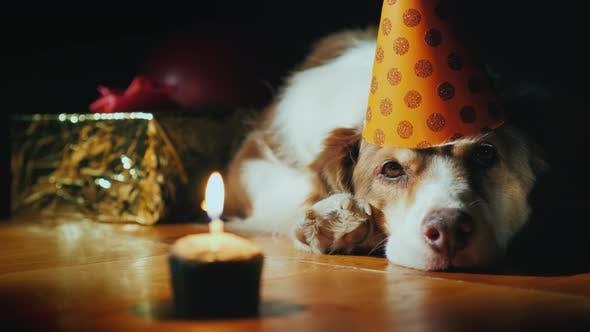 Thumbnail for Ein trauriger Hund feiert sein Jubiläum. Vor ihm ein Kuchen mit Kerze