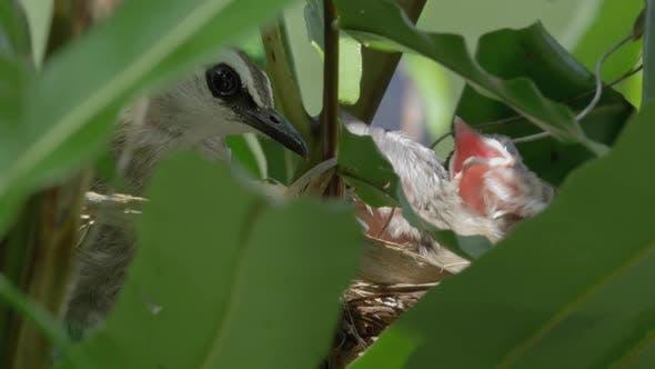 Thumbnail for Bird Mother Feeding Her Chicks
