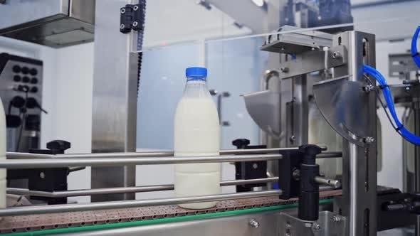 Milk production line. Milk bottles on industrial conveyor