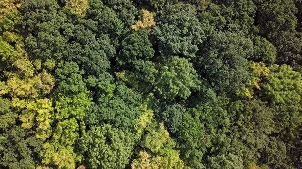 Overhead View of Top of Summer Forest