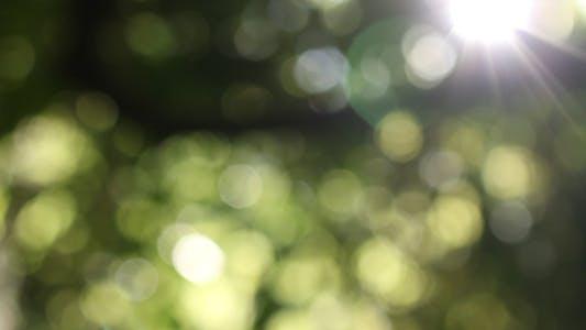 Thumbnail for Nature Bokeh 01