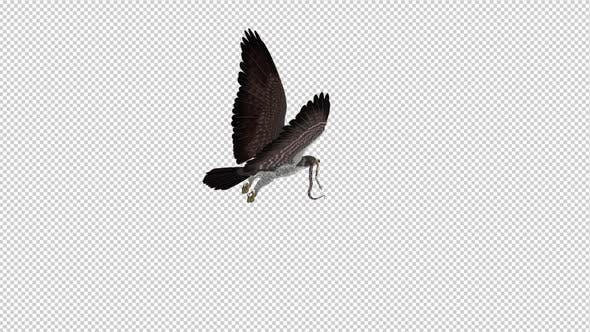 Thumbnail for Snake Eagle with Serpent - 4K Flying Loop - Back Angle