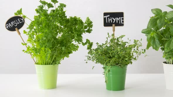 Thumbnail for Herbs or Spices with Name Plates in Pots on Table