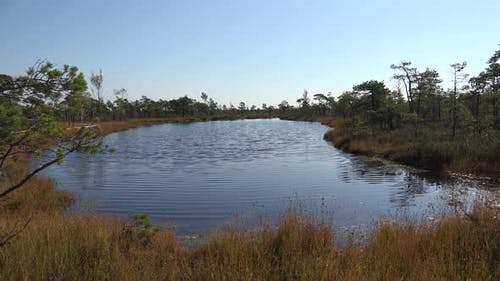 Swamp 4