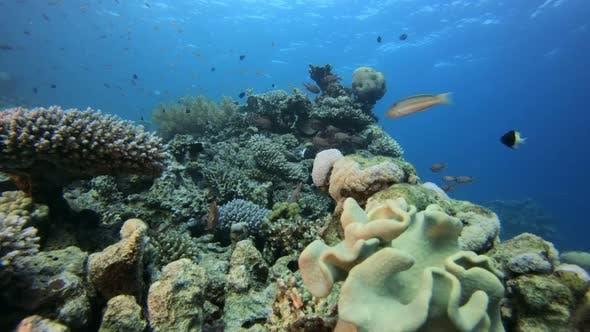 Thumbnail for Tropical Coral Garden