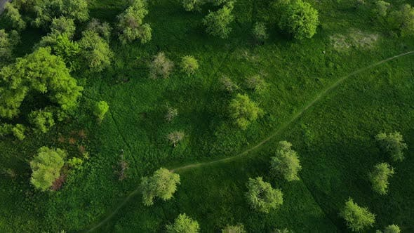 Thumbnail for Top View of Green Forest and Grass with Path