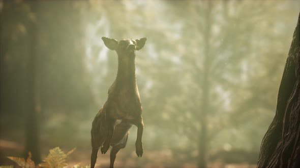 Thumbnail for Extreme Slow Motion Deer Jump in Pine Forest