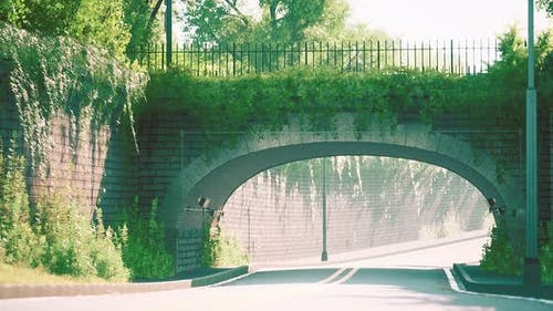 Arch Bridge with Living Bush Branches in Park