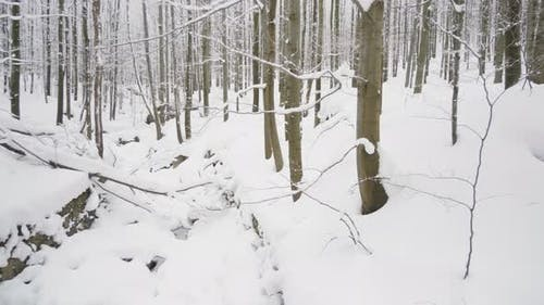 A Snowcovered Stream in Forest in Winter