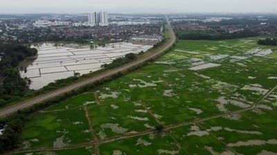 Farmland rice field beside railway