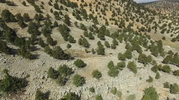 Thumbnail for Sparse Trees On Arid Mountain Slope