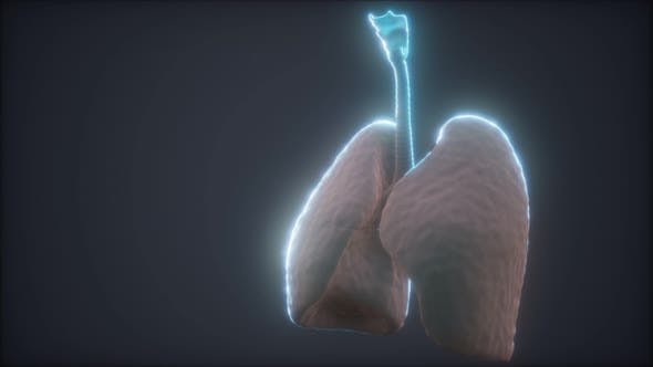 Thumbnail for 3D Animation der menschlichen Lunge