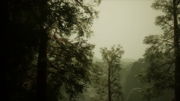 Fog and Pine Trees on Rugged Mountainside and Coming Storm