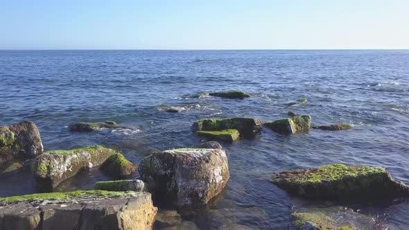 Seaweed on Sea Coast Reef