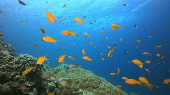 Cover Image for Tropical Fishes Seascape