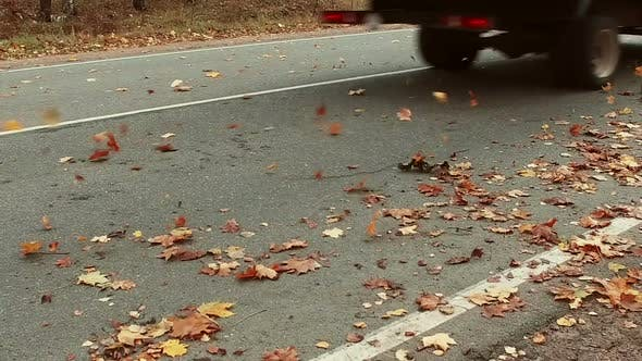Thumbnail for Fallen Autumn Leaves Scatter After Driving on the Highway