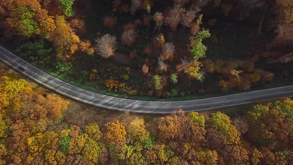 Thumbnail for Aerial of Car Driving Through Sunny Autumn Forest