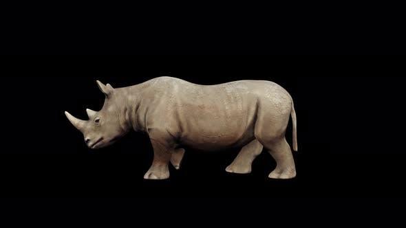 Thumbnail for 4K Rhinoceros Walking