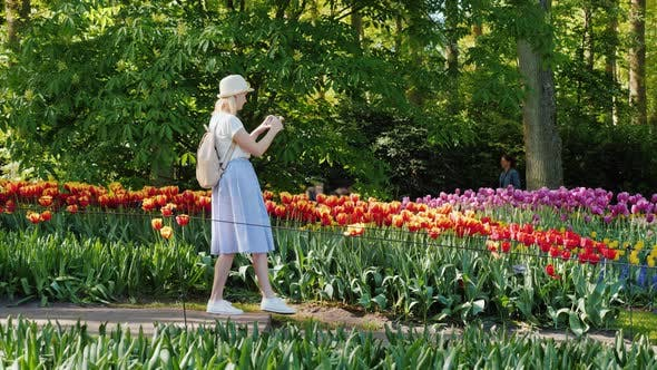 Cover Image for A Female Tourist Walks Along the Keukenhof Park, Taking Pictures on the Go. Tourism in the