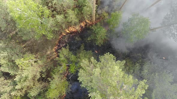 Top View of an Invincible Forest Fire