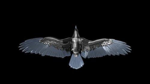 Silver Eagle - Flying Loop - Top View