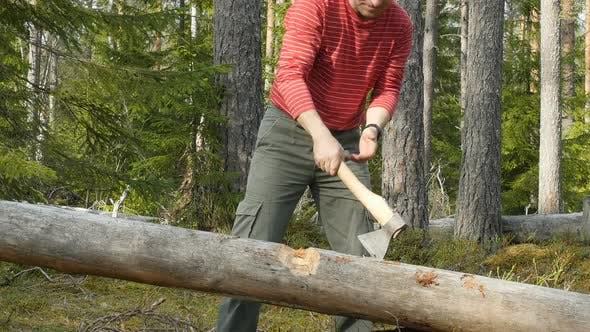 Woodcutter Cuts The Tree With An Axe. Male Tourist Chopping Wood With An Axe.