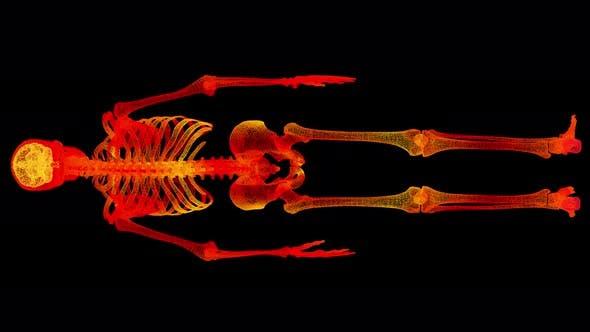 Head Up Display of Advance Human Biomedical Diagnostic Skeleton