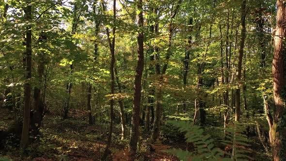 Autumn Jungle Trees