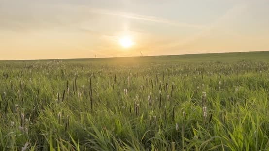 Thumbnail for Hill Meadow Timelapse at the Summer or Autumn Time. Wild Endless Nature and Rural Field. Sun Rays