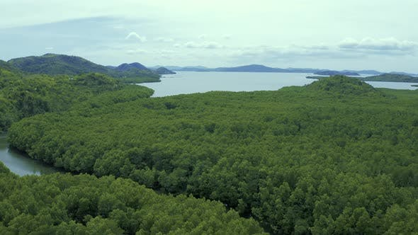 Thumbnail for Mangrove Forest Along the Mountain and Winding Road in the Summer on the Coron