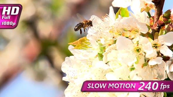 Thumbnail for Pollination