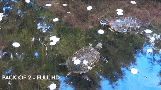 Thumbnail for Japanese Garden - Water Turtles - 2-pack