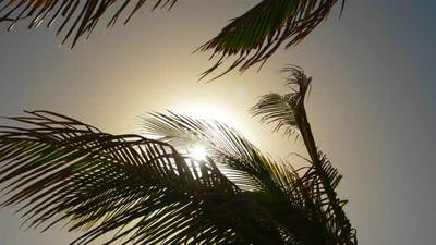 Sun Flare and the Palm Tree