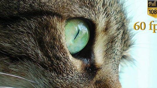 Thumbnail for Beautiful Cat