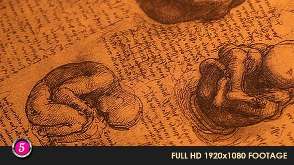 Thumbnail for Anatomy Drawings 13