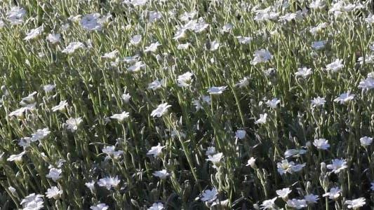 Cover Image for Garden Flowers