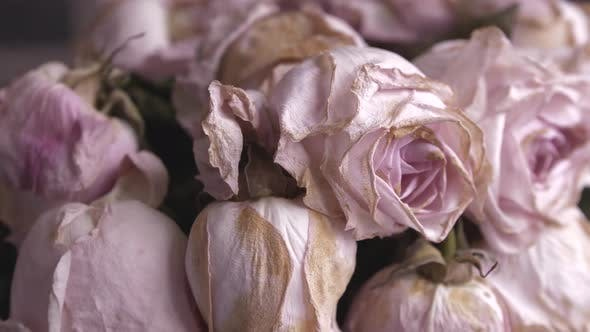 Thumbnail for Faded Bouquet of Pink Roses