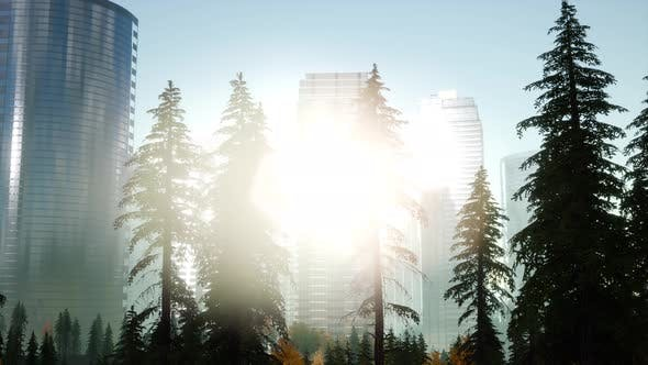 Thumbnail for Skyscrapers at Sunset and Park Trees