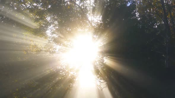 Light of Sun with Sunbeam in Foggy Forest Nature