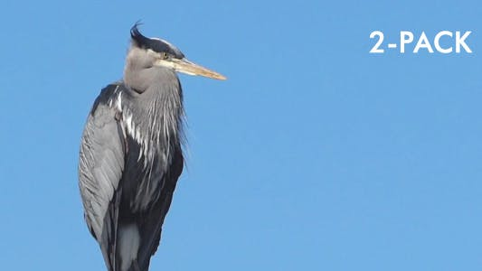 Thumbnail for Heron In Harbor - Pack of 2