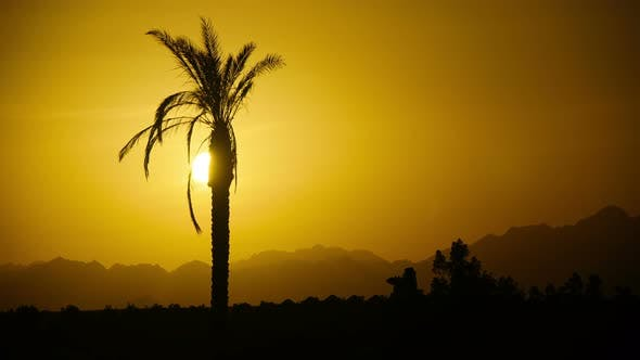 Thumbnail for Silhouette of Tropical Palm Tree at Sunset, Time Lapse